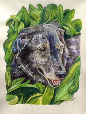 BOO. Colored pencil on paper. 11x14in. SOLD. This is the much beloved black lab of a close friend of mine, Sandy. I worked really hard to get the expression right on this one. Pets have very distinct faces, just like humans.